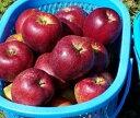 【ふるさと納税】【先行予約】 ファームたんぽぽ の りんご ...