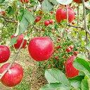 【ふるさと納税】[ 先行予約 ] 紅玉 4.5kg ※沖縄および離島への配送不可 やまじゅうファーム 信州の環境にやさしい農産物 長野県 飯綱町 【 果物 フルーツ 林檎 リンゴ りんご 】 発送:2021年10月上旬〜