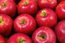 【ふるさと納税】【先行予約】 ヤマハチ農園 の りんご シナ...