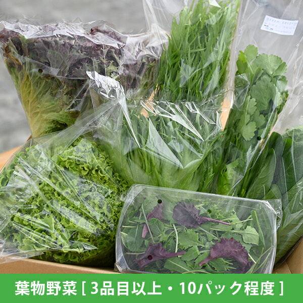 水耕栽培 新鮮 葉物野菜Aセット