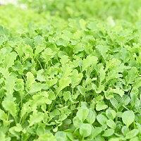【ふるさと納税】M08S31水耕栽培の葉物野菜_