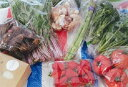【ふるさと納税】みのかも野菜セット(春(3・4・5月)、秋(9・10・11月)2回)