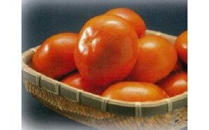 【ふるさと納税】富有柿贈答用4L×18個入り 【果物類/柿】 お届け:11月1日〜25日