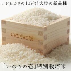 【ふるさと納税】飛騨産特別栽培米・新品種『いのちの壱』3kg[B0046]