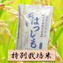 【ふるさと納税】特別栽培米 ハツシモ 精米10kg(分搗き可...