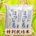 【ふるさと納税】特別栽培米 ハツシモ 精米20kg(分搗き可)または 玄米(22Kg) 29年産
