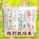 【ふるさと納税】特別栽培米 30kg ミルキー/コシヒカリ/...