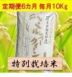 【ふるさと納税】【定期便】特別栽培米 10kg×6カ月 ミルキークイーン(分搗き可)または 玄米(1割増) 29年産