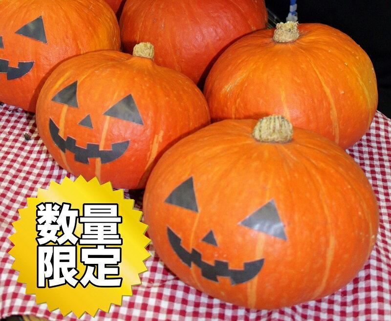 【ふるさと納税】限定30!富加町のかぼちゃ『食べるハロウィン かぼちゃ』