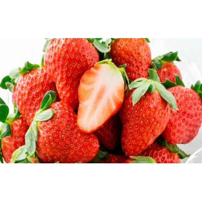 【ふるさと納税】ほっぺたが落ちる『紅ほっぺ』2箱8パック 【果物類・いちご・苺・イチゴ】 お届け:2021年2月上旬〜4月中旬