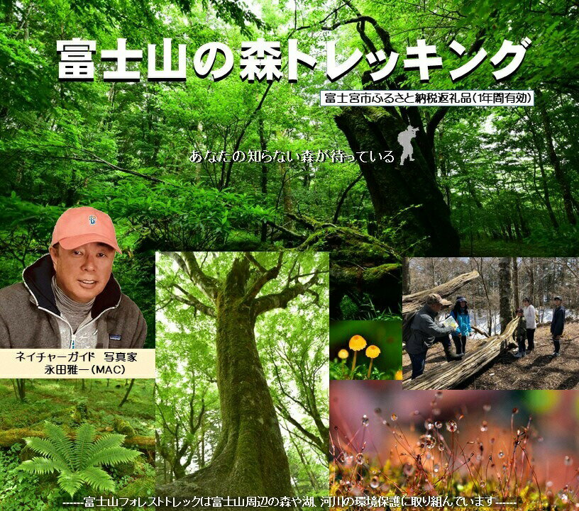 【ふるさと納税】富士山の森トレッキング 親子ペアコース(大人1名・小中学生1名)体験 自然 ガイド付き エコツアー 静岡県富士宮市