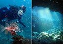 伊東・城ヶ崎の海で『2ビーチファンダイブ』ジオパークの海中世...