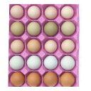 【ふるさと納税】滋養豊富 烏骨鶏の卵入り 鶏卵5種 詰め合わ