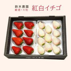 鈴木農園紅白いちごインデックス