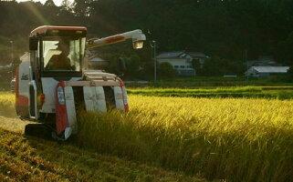 トラクター稲刈り