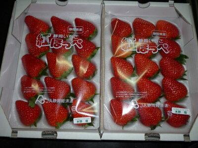 【ふるさと納税】掛川産いちご「紅ほっぺ」500g×2水野農園