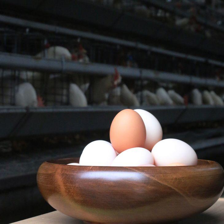 卵, 鶏卵 80