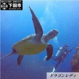 【ふるさと納税】ファンダイビングダイビング海