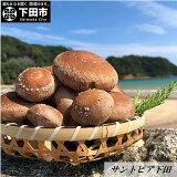 【ふるさと納税】温泉栽培生しいたけ(菌床)1.2kg送料無料