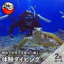【ふるさと納税】 体験 ダイビング 海 初心者 2回コース