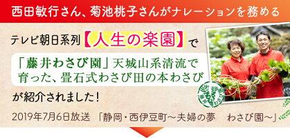 【ふるさと納税】西伊豆町の本わさび(藤井さんちのわさび園)