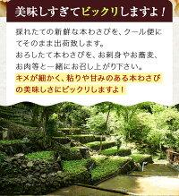 【ふるさと納税】「世界農業遺産認定」本わさび