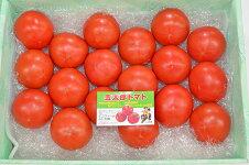 【ふるさと納税】A−3金太郎トマト1箱