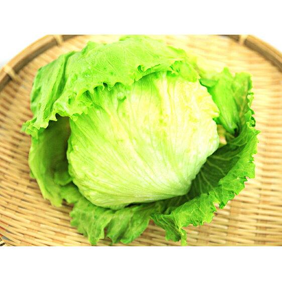 【ふるさと納税】遠州中央産レタス(10kg) 【野菜】 お届け:2020年1月上旬~2020年2月末