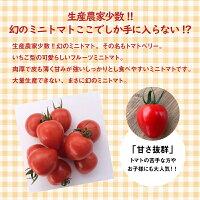 【ふるさと納税】4月〜6月の発送甘さ抜群!!トマト嫌いも食べられるトマトベリー≪先行受付≫