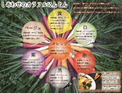 【ふるさと納税】期間限定 冬の寒さでぎゅっと濃い!虹色のカラフルにんじん H022-007 画像2