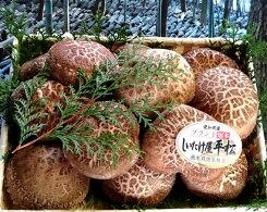 【ふるさと納税】No.071愛知県知多市産原木生椎茸