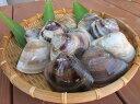 【ふるさと納税】 丸元水産 桑名産蛤(ハマグリ)1.5kg