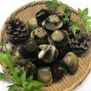 マルヨシ水産 桑名産中粒天然蛤 1.5kg