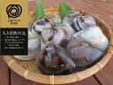 【ふるさと納税】 丸元水産 桑名産蛤(ハマグリ)0.9kg