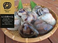 【ふるさと納税】丸元水産桑名産蛤(ハマグリ)0.9kg