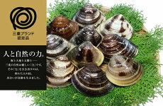 【ふるさと納税】マルヨシ水産桑名産大粒天然蛤0.8kg