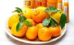 【ふるさと納税】自然塾季節の柑橘詰合せ【定期便3回】