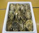 【ふるさと納税】三重県産 的矢漁協かき セル25個入り