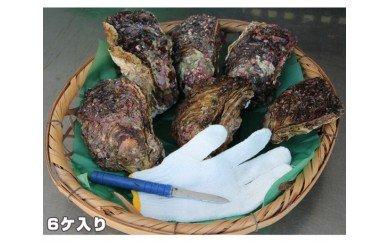【冷蔵】岩ガキ 6ケ入 約2kg〜約2.5kg/貝 牡蠣 かき カキ 天然 養殖 BBQ 伊勢志摩産