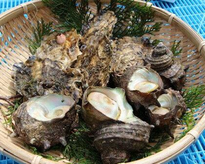 (冷蔵)伊勢志摩産 貝類セット(サザエ・カキ)A/ 牡蠣 かき 壺焼 さざえ バーベキュー 三重県