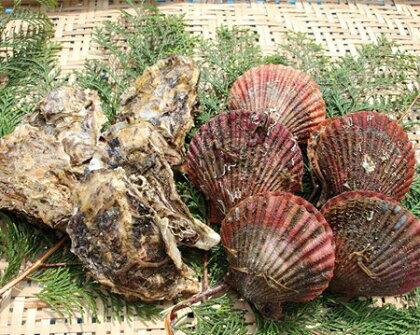 (冷蔵)伊勢志摩産 貝類セット(アッパ貝・カキ)C/ 牡蠣 かき ヒオウギガイ BBQ 海鮮 三重県