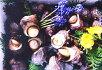 【ふるさと納税】地物活きサザエBコース約2.4kg川友商店/貝壺焼さざえ海鮮新鮮南伊勢町伊勢志摩産