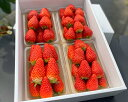 【ふるさと納税】No.198 有機肥料3種盛いちご 4パック入×1箱