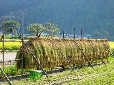 【ふるさと納税】特別栽培米コシヒカリ 北びわこプレミア米 30kg※着日指定はできません。