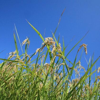 平成29年産新米!環境こだわり農産物 低農薬100%有機肥料コシヒカリ 白米 5kg※着日指定はできません。
