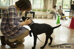 【ふるさと納税】盲導犬訓練支援寄付〜「行きたい場所に、安心していける社会に…」〜(100,000円)