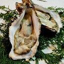 【ふるさと納税】京都久美浜産 殻付き牡蠣 3キロ