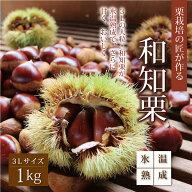 【ふるさと納税】氷温熟成・栗栽培の名匠が育てた極上・和知栗3L1kg