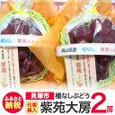 [ふるさと納税]R159I 種なしぶどう「紫苑(しえん)」大...