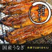 【ふるさと納税】国産うなぎ蒲焼き(5匹)[0017]
